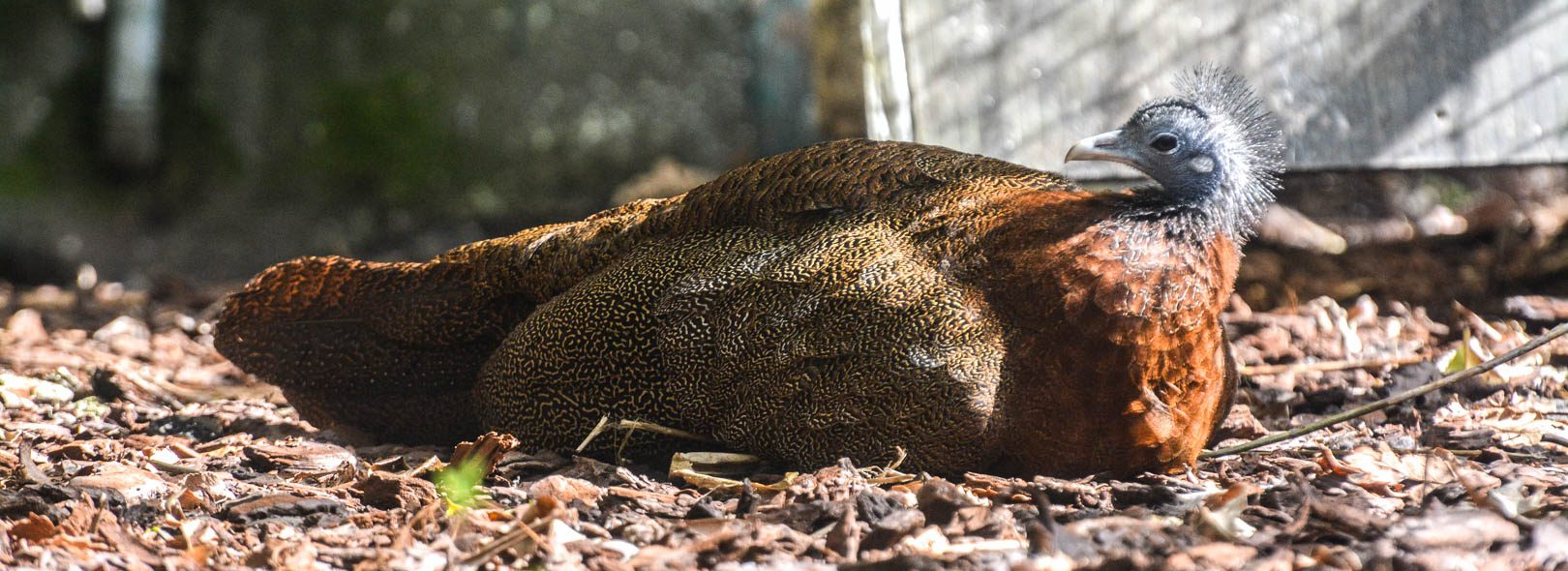 World Pheasant Association – España